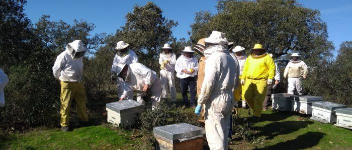 Reunión de apicultores junto a las colmenas